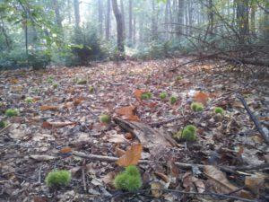Tamme kastanjes op de grond voor Ouders van Nature.nl