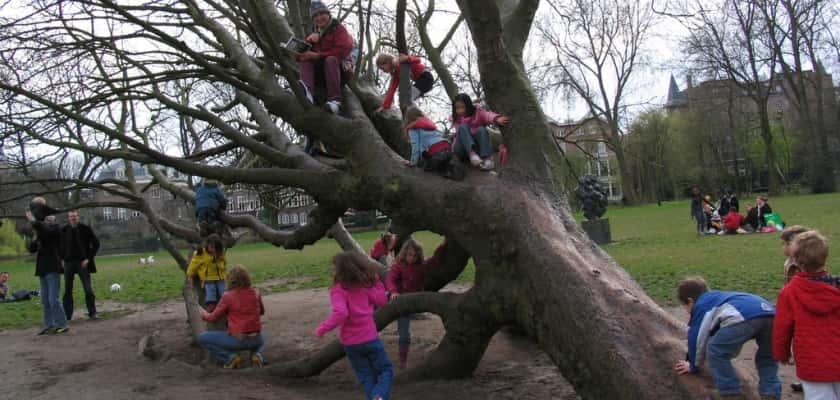 In bomen klimmen