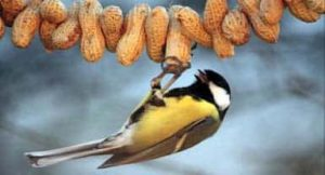 Afbeeldingsresultaat voor vogelvoederketting
