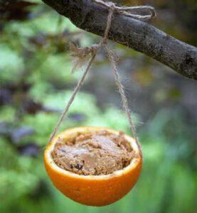Sinaasappel met vogelvoer, Oudersvannature.nl
