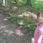 Natuuractiviteit: zoekspelletje