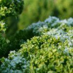 Wintersalade: farro met boerenkool