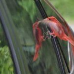 Maak je ramen vogelvriendelijk