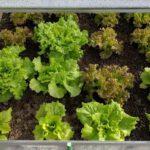 Zaai-instructies per plant