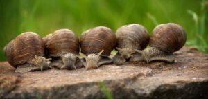 slakken in de tuin