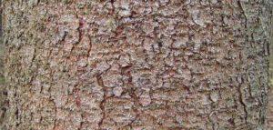 boomschors afdrukken maken