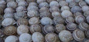 last van slakken en naaktslakken