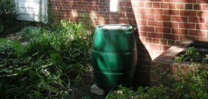 regenton om regenwater opvangen plantjes in de moestuin