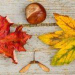 Tips om herfstbladeren te bewaren